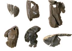北海道遺跡百選8 縄文アクセサリーコレクション2015 恵庭市西島松遺跡群と副葬品